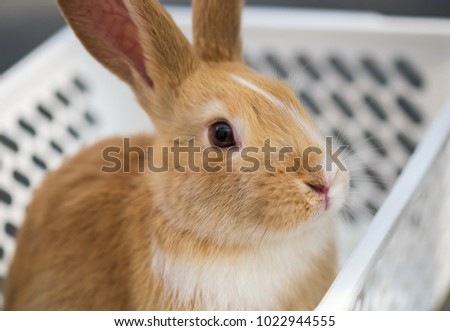 Brown bunny sit in white basket at pets' corner. Selective focus #1022944555