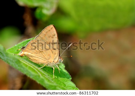 Brown butterfly on leaf (Karen Silverline)