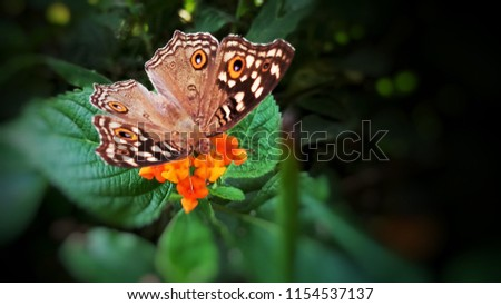 Brown butterfly on red flower  #1154537137