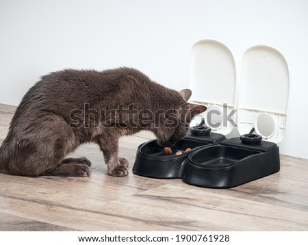 Brown cat eats from the automatic feeder ストックフォト ©
