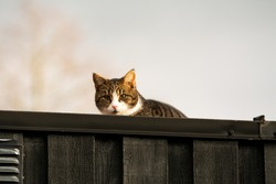 Brown cat on the roof