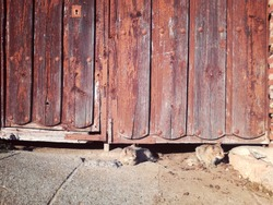 Brown cats. Cute kittens. Animals resting under the wooden door. Central part of an old wooden door of an agricultural village in the middle of Spain. Ancient forges. Huge lock. Rusted iron. Antique.
