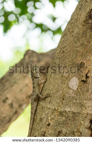 Brown chameleon camouflage against the bark of a tree.