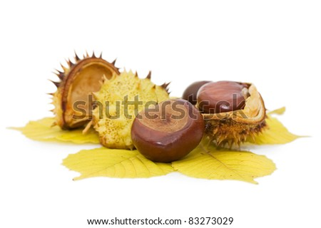 Brown chestnut nut closeup isolated on white