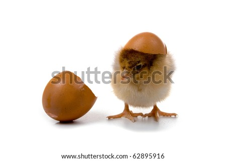Brown chickens isolated on a white background