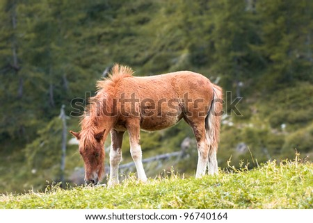 Brown colt eating grass under drizzle