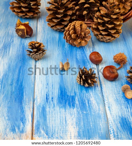 brown cones on a blue background new year christmas and autumn background natural
