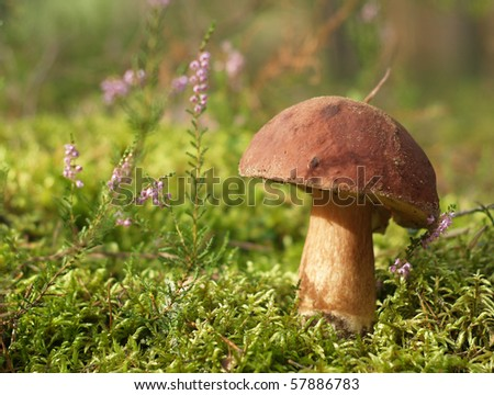 Brown cup mushroom on moss in forest #57886783