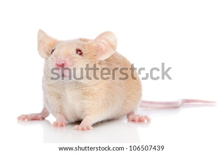 Brown Decorative mouse on a white background. Macro shoot