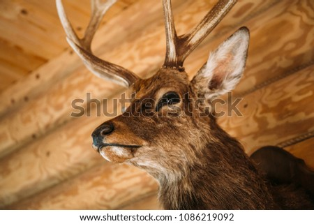 Brown deer head on wooden wall background. Animals draft or trophy decorative object. Taxidermy concept #1086219092