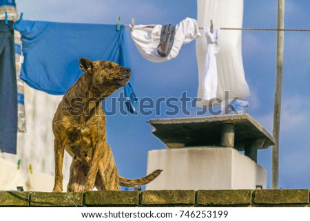 Brown dog barking at roof house