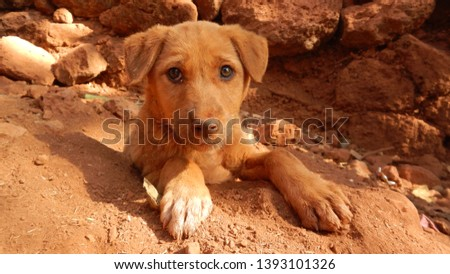 Brown dog brown eyes brown sand