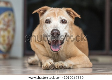 Brown dog eyes contact and crouch to the ground #1090267850