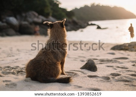 brown dog  sitting alone on the beach alone and looking people in background.  #1393852619