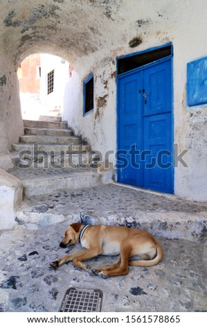 Brown dog sleeping on the ground in a passage in front of a blue wooden door, Oia, Ia, Santorini, Cyclades, Greece, Europe
