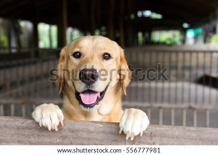Brown dog stood and wait over the cage  #556777981