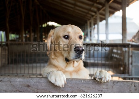 Brown dog stood and wait over the cage background #621626237