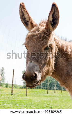 brown donkey portrait close up