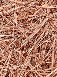 Brown Dried and Fallen Pine Needles