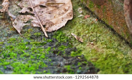 Stock Photo brown dry leaf on the area with on floor with green moss-covered area.