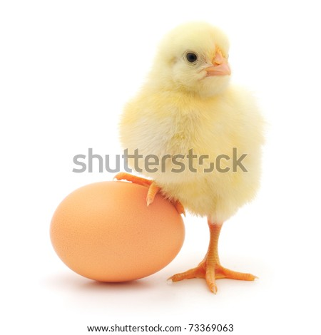 stock photo : brown egg and chicken isolated on a white background