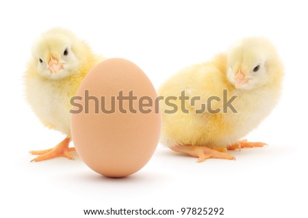 brown egg and two chickens isolated on a white background