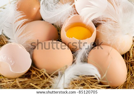 Brown eggs and feathers at hay in chicken farm