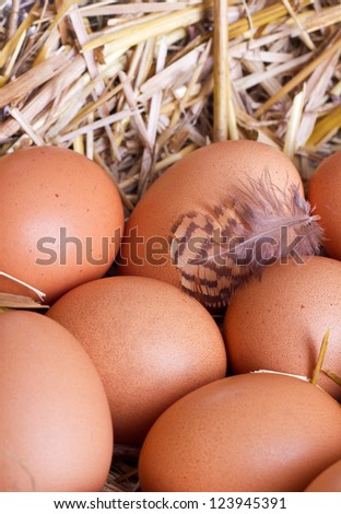 brown eggs in a nest/eggs/easter