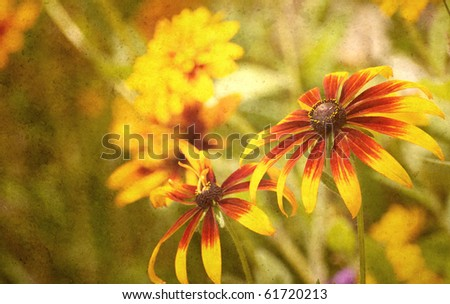 Brown eyed Susan flowers in the sunshine antiqued on texture.