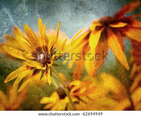 Brown eyed Susan flowers in the sunshine.  Grunge textured.