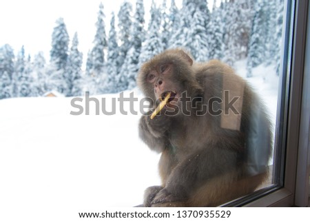 Brown fluffy monkey Sitting to eat bread outside the window Outside with snow In the daytime