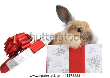 brown  fluffy rabbit sits in  box for  gift