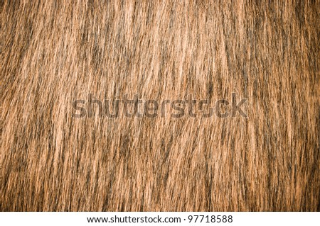 Brown fur for background usage