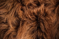Brown Fur Natural, Wolf Fox, Animal Wildlife Hair Fur / Concept and Idea Style for Background, textures and wallpaper. Close up Full Frame.