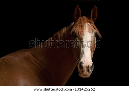 Brown Horse #131425262