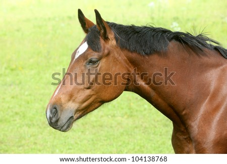 Brown Horse Pictures Brown horse against grass