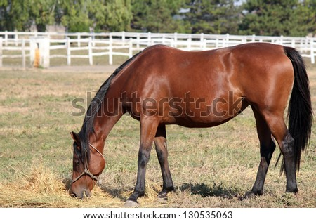 brown horse eating hay in corral ranch scene