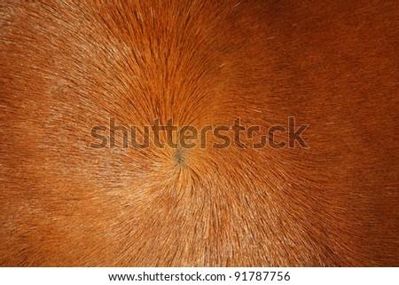 Brown horse fur background