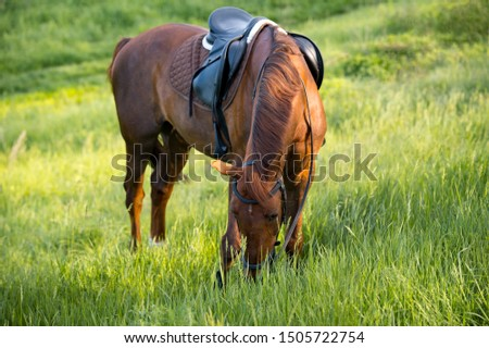 Brown horse grazing on pasture at sundown in nature #1505722754