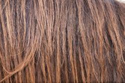 brown horse hair
