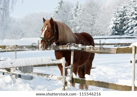 Brown horse in a cold winter pasture