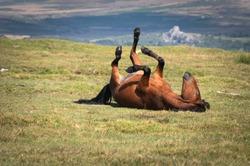 Brown Horse in Dartmoor National Park