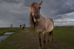 Brown Horse In Field On Rainy Day. High quality photo