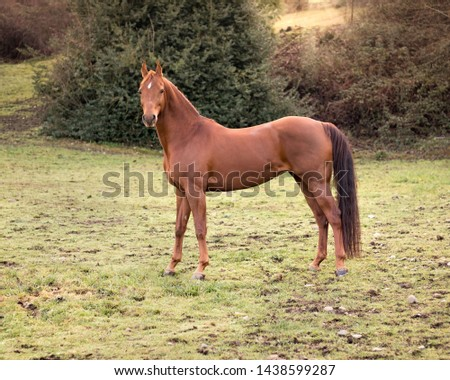 brown horse in pasture on a ranch #1438599287