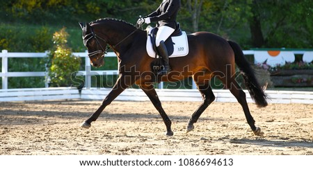 Brown horse in portraits during a dressage competition, photographed in the suspended phase with the leg extended.