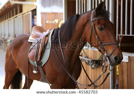 Brown horse in stable door rigged with saddle and reins