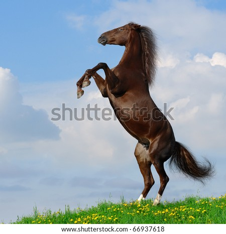Brown horse rear on a hill - stock photo