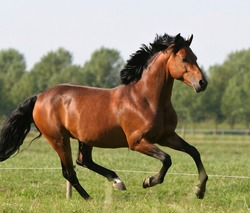 Brown horse rides on a green field