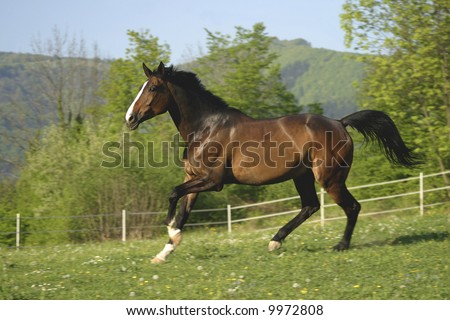 Brown horse running in pasture.