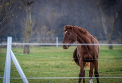 Brown horse running in the spring pasture.